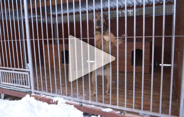 Dofinansowanie schroniska dla bezdomnych zwierząt w Białej Podlaskiej